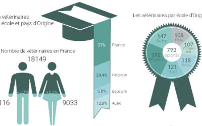 Quel est le nombre de vétérinaires en France ?